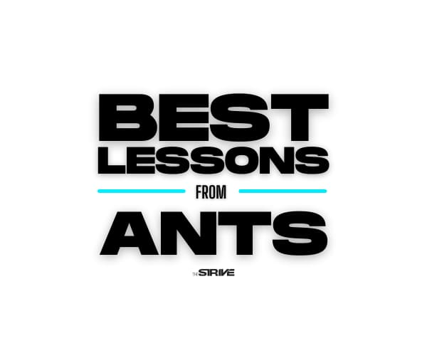 Best Lessons From Ants